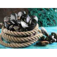 Moules de cordes Marennes 2 kg
