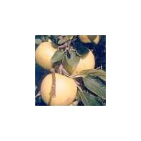 Pommes Chanteclerc, 1 kg (à croquer/ à cuire)