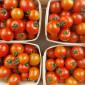 Tomates Cocktail (1KG)