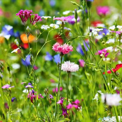 Les plants bio en ligne, naturels, comestibles, plantes ornementales